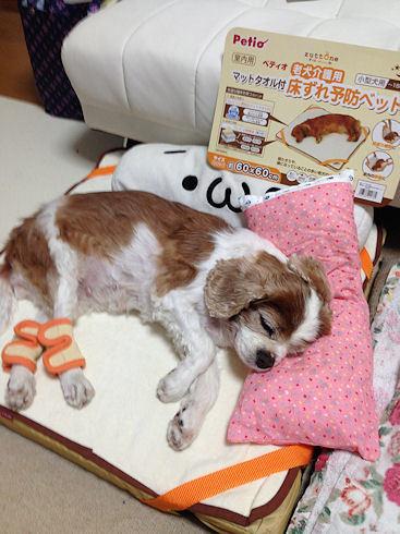 床ずれ防止ベットに寝る愛犬