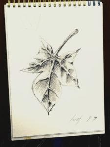 葉っぱデッサン陰影